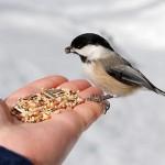 birdwatch_02